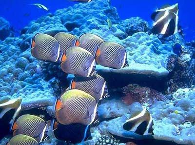 Подводный Мальдийский мир