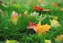 Осень — это прекрасно!