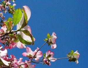 Статусы о весне