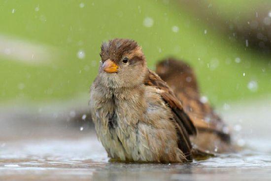 летний дождь фото