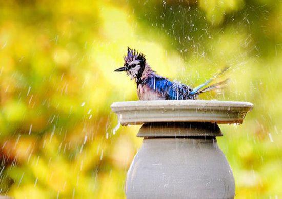 люблю летний дождь