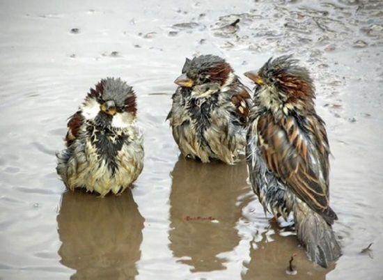 после летнего дождя
