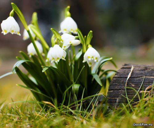 Волшебная весна