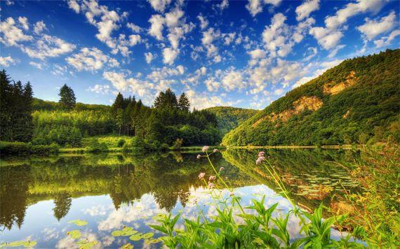 Красота спасет мир - лесной пейзаж