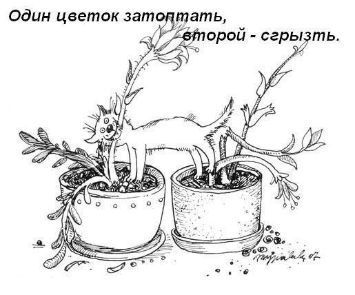 Затоптать цветок