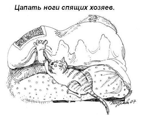 Цапать за ноги спящих хозяев