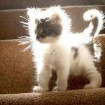 Кошачьи заботы