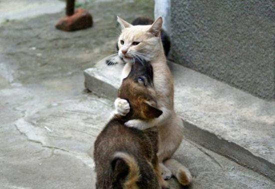 У каждой собаки должен быть свой кот- фото 1