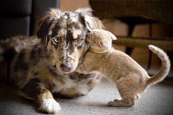 У каждой собаки должен быть свой кот- фото 2