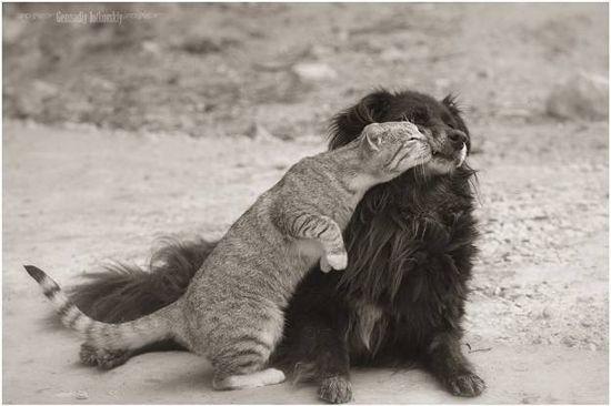 У каждой собаки должен быть свой кот- фото 3