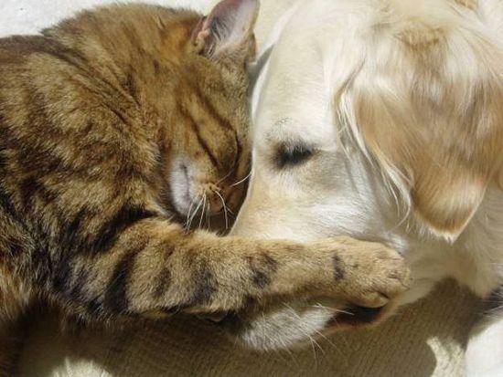 У каждой собаки должен быть свой кот- фото 4