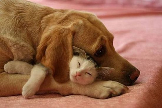 У каждой собаки должен быть свой кот- фото 5