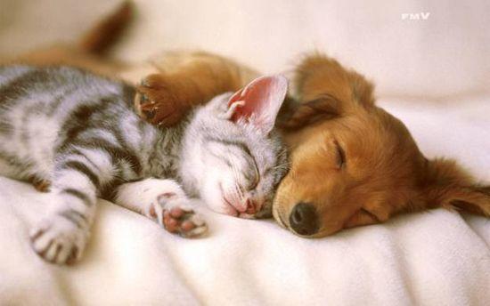 У каждой собаки должен быть свой кот- фото 7