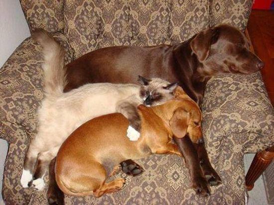 У каждой собаки должен быть свой кот- фото 8