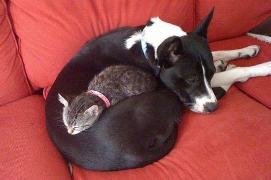 У каждой собаки должен быть свой кот- фото 9