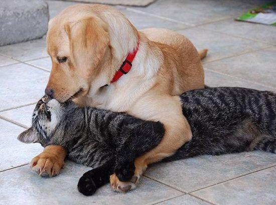 У каждой собаки должен быть свой кот- фото 10