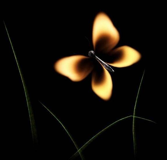 Огненные Шедевры от Станислава Аристова - бабочка